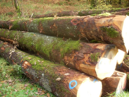 Carpentier hardwood solutions importeur hout